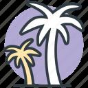 beach, coconut trees, date trees, island, palm, palm trees