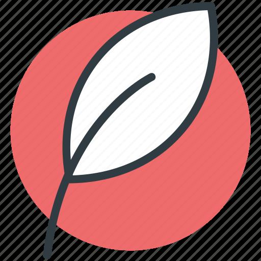 ecology, green foliage, greenery, leaf, nature icon