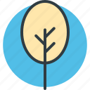cypress tree, evergreen tree, tree icon