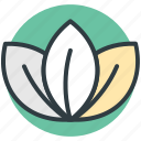 lotus, lotus lily flower, flower, natural, lotus lily