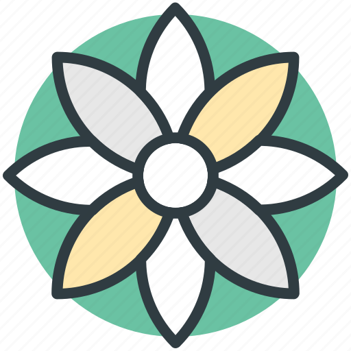 bloodroot, bloodroot flower, flower, nature, spring flower icon