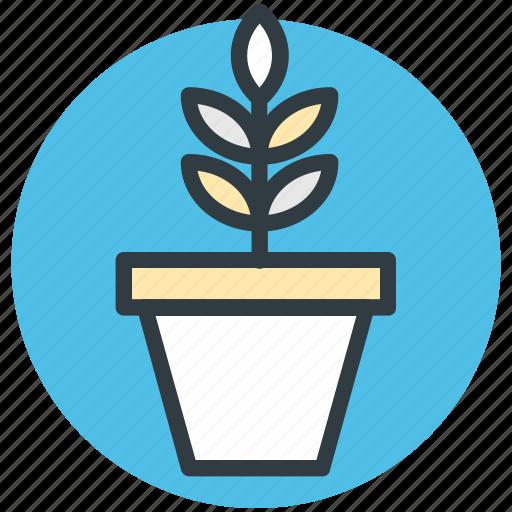 nature, nature inspiration, plant, pot plant, small plant icon