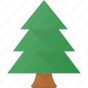forest, green, nature, park, pine, tree icon