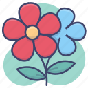 beautiful, daisy, flower, nature icon