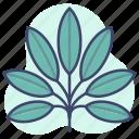 herb, leaf, leaves, plants icon