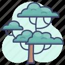 nature, plants, tree, trees icon