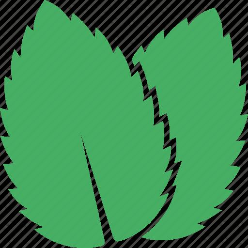 green, leaf, leaves, mentha, mint, peppermint, spearmint icon