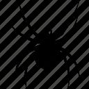 arachnid, black, bug, halloween, spider, tarantula, widow icon