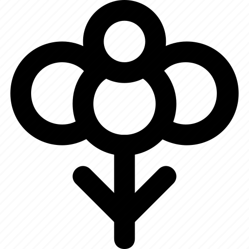 candytuft, ecology, environment, floral, nature icon