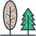 cypress tree, evergreen trees, forest, greenwood, poplar tree icon