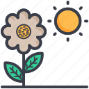 chlorophyll, daisy, photosynthesis process, plant, sun icon