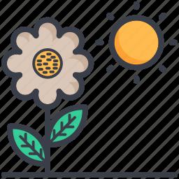 chlorophyll, daisy, photosynthesis process, plant, sun icon