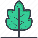 autumn, foliage, leaf, maple leaf, winter leaf icon