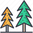 evergreen trees, fir trees, jungle, larch trees, pine trees