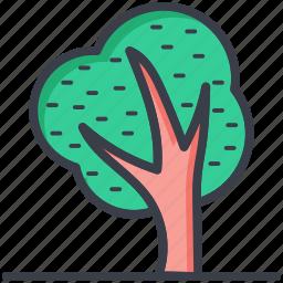 cypress tree, greenery, nature, shrub tree, trees icon