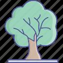 tree, ash, oak, shrub icon