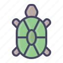 marine, sea, tortoise, turtle