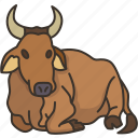 cow, ox, cattle, domestic, animal