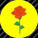 rose, creative, decoration, flower, love, plant, present
