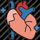 heart, organ, medical, human, healthcare, health, cardia