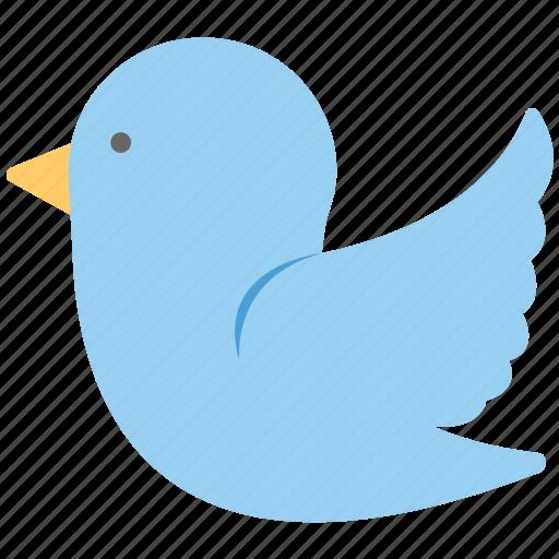 bluebird, dove, social network sign, tweet bird, twitter logo icon