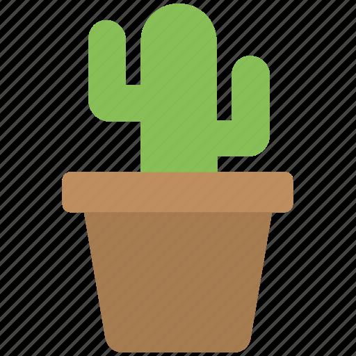 cactus plant, desert plant, flower pot, house plant, succulent icon