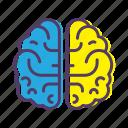 biology, brain, genius, idea, science