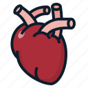 anatomy, heart, organ icon