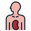 anatomy, donation, donor, human, organ icon