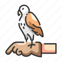 animal, falcon, hawk, obedient, outdoor, pet, training icon