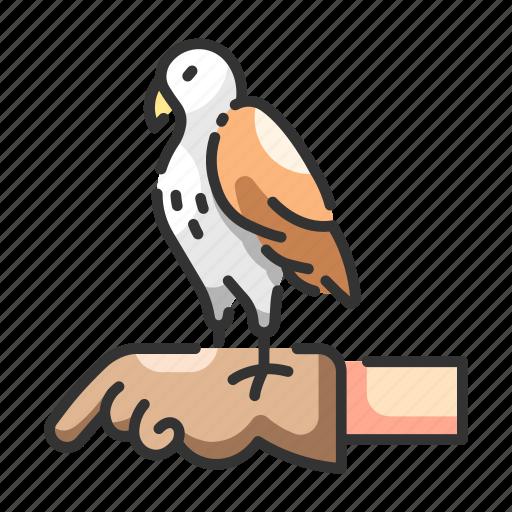 animal, falcon, hawk, obedient, outdoor, pet, training icon