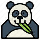 panda, bear, animal, ursidae, eat