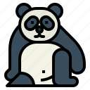 panda, bear, animal, ursidae, sit