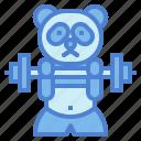 panda, bear, animal, ursidae, barbell