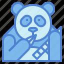 panda, bear, animal, ursidae, eat