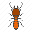 termite, insect, pest, beetle, white ant, bug