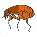 animal, bloodsucker, bug, flea, insect, parasite, pest