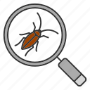 bug, cockroach, insect, magnifier, pest, roach, search icon