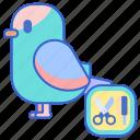 bird, grooming, pet