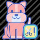 dog, grooming, pet