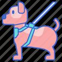 animal, dog, harness, pet icon