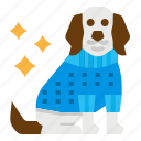 animal, clothes, dog, pet, pets