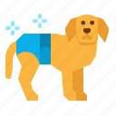 animal, diaper, dog, pet