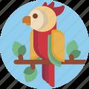 adorable, bird, colorful, exotic, nature, parrot, petshop