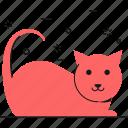 cat, animal, pet, animals, cute
