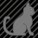 cat, pet, animal, sit, sitting, kitty