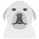 dog, flat vector icon., pet animal icon