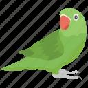 bird, cockatiel, cockatoo, domestic, macaw, parrot, pet