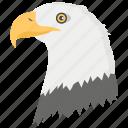 bird of jovet, eagle, eagle head, falcon, flying bird icon