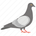 domestic animal, dove, flying bird, pet, pigeon icon